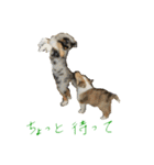 rough collies love 1(個別スタンプ:14)