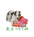 rough collies love 1(個別スタンプ:17)