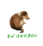 rough collies love 1(個別スタンプ:20)