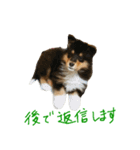 rough collies love 1(個別スタンプ:21)