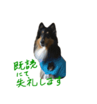 rough collies love 1(個別スタンプ:22)