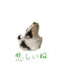 rough collies love 1(個別スタンプ:27)