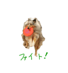 rough collies love 1(個別スタンプ:29)