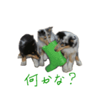 rough collies love 1(個別スタンプ:31)
