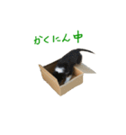 rough collies love 1(個別スタンプ:36)