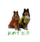 rough collies love 1(個別スタンプ:38)