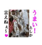 【実写】牛丼(個別スタンプ:12)