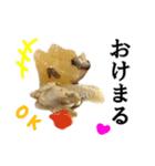 【実写】牛丼(個別スタンプ:32)