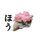 【実写】牛丼(個別スタンプ:36)