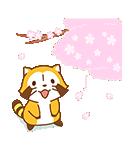 あらいぐまラスカル桜くじ付きスタンプ(個別スタンプ:13)