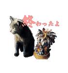 チョコーねこ(個別スタンプ:03)