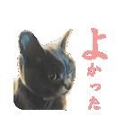 チョコーねこ(個別スタンプ:05)