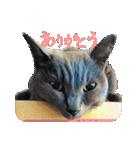 チョコーねこ(個別スタンプ:08)