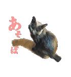 チョコーねこ(個別スタンプ:09)