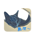チョコーねこ(個別スタンプ:26)
