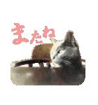 チョコーねこ(個別スタンプ:27)