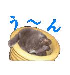 チョコーねこ(個別スタンプ:39)