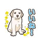 わんこ日和ラブラドールの仔犬 5(個別スタンプ:13)