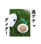 【実写】ガスボンベ(個別スタンプ:15)
