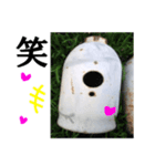 【実写】ガスボンベ(個別スタンプ:25)