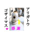 【実写】ガスボンベ(個別スタンプ:26)
