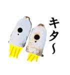 【実写】ガスボンベ(個別スタンプ:30)