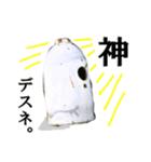 【実写】ガスボンベ(個別スタンプ:31)