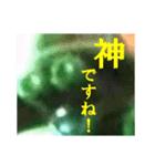 【実写】自宅警備員(個別スタンプ:23)