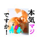 【実写】泣きのタマネギ(個別スタンプ:05)