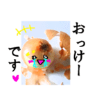 【実写】泣きのタマネギ(個別スタンプ:12)