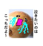 【実写】泣きのタマネギ(個別スタンプ:13)