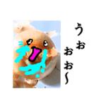 【実写】泣きのタマネギ(個別スタンプ:14)