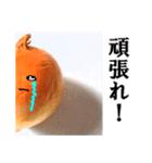 【実写】泣きのタマネギ(個別スタンプ:15)