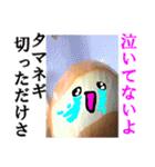 【実写】泣きのタマネギ(個別スタンプ:16)