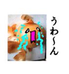 【実写】泣きのタマネギ(個別スタンプ:17)