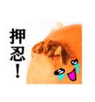 【実写】泣きのタマネギ(個別スタンプ:20)