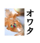 【実写】泣きのタマネギ(個別スタンプ:21)