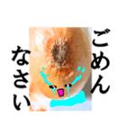 【実写】泣きのタマネギ(個別スタンプ:30)