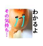 【実写】泣きのタマネギ(個別スタンプ:34)