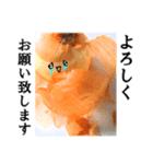 【実写】泣きのタマネギ(個別スタンプ:35)