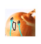 【実写】泣きのタマネギ(個別スタンプ:39)
