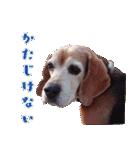ビーグルの写真スタンプ(個別スタンプ:02)