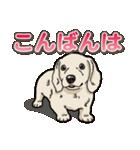 わんこ日和 ミニチュアダックスフンド仔犬(個別スタンプ:3)