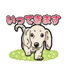わんこ日和 ミニチュアダックスフンド仔犬(個別スタンプ:4)