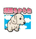 わんこ日和 ミニチュアダックスフンド仔犬(個別スタンプ:9)