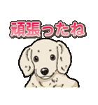 わんこ日和 ミニチュアダックスフンド仔犬(個別スタンプ:10)