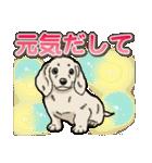 わんこ日和 ミニチュアダックスフンド仔犬(個別スタンプ:11)