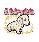 わんこ日和 ミニチュアダックスフンド仔犬(個別スタンプ:17)