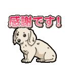 わんこ日和 ミニチュアダックスフンド仔犬(個別スタンプ:27)