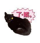 リアルにゃんこ!みかげ & チャー 2(個別スタンプ:02)